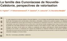 La famille des Cunoniaceae de Nouvelle- Calédonie, perspectives de valorisation